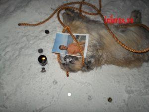 петля рабства на пса