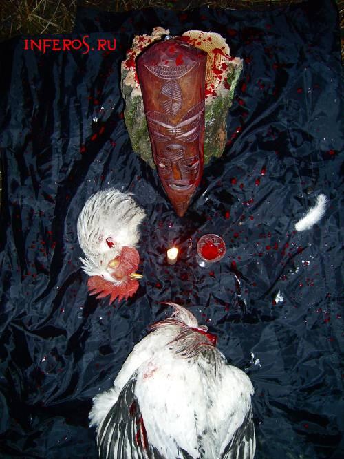 Ритуал жертвоприношения петуха